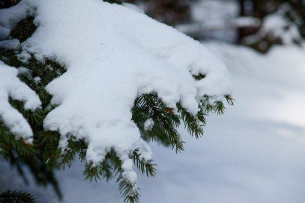 Natur Schnee